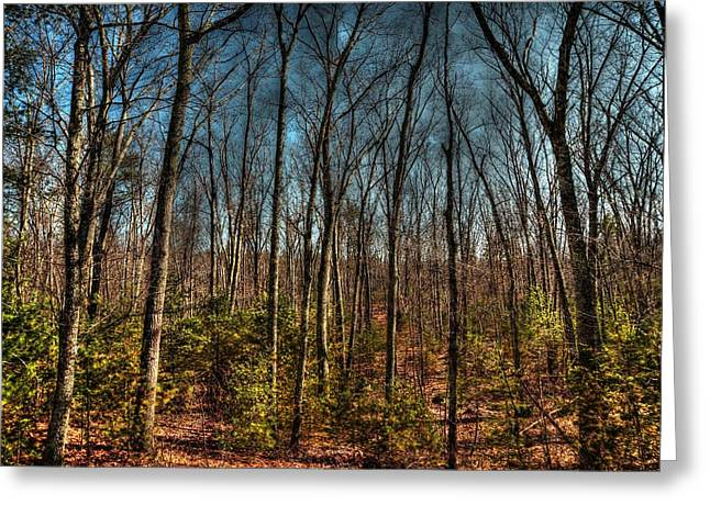Hdr Landscape Greeting Cards - Forrest Greeting Card by Craig Incardone