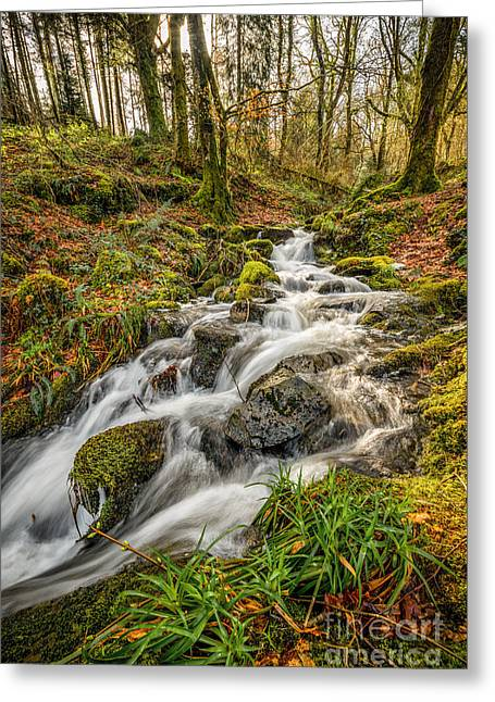 Stream Digital Greeting Cards - Forest Stream Greeting Card by Adrian Evans