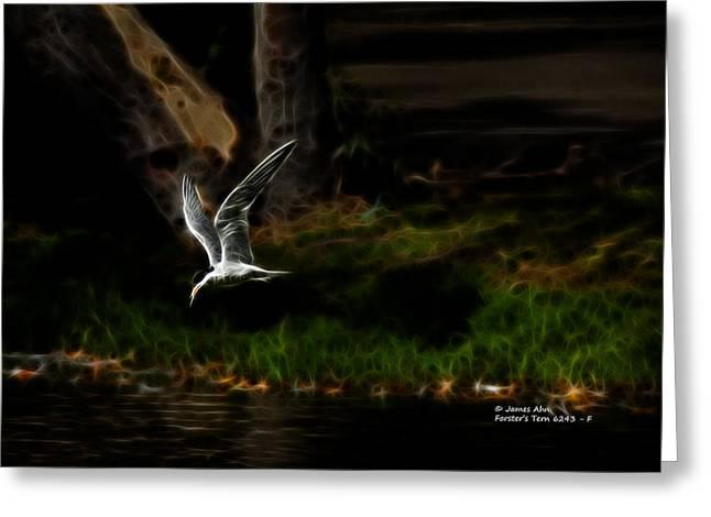 Tern Digital Greeting Cards - Forsters Tern 6243 F Greeting Card by James Ahn