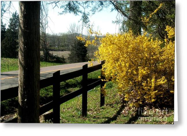 Forsythia Greeting Cards - Forsythia Along the Highway Greeting Card by Kip DeVore