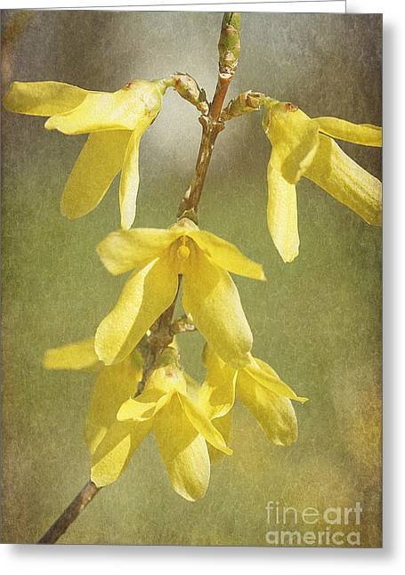 Cindi Ressler Greeting Cards - Forsythia Greeting Card by Cindi Ressler