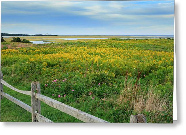 Cape Cod Greeting Cards - Fort Hill Area Cape Cod  Greeting Card by Bill  Wakeley