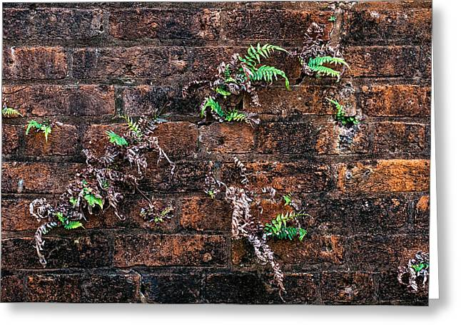 Military Greeting Cards - Fort Macomb ferns Greeting Card by Andy Crawford