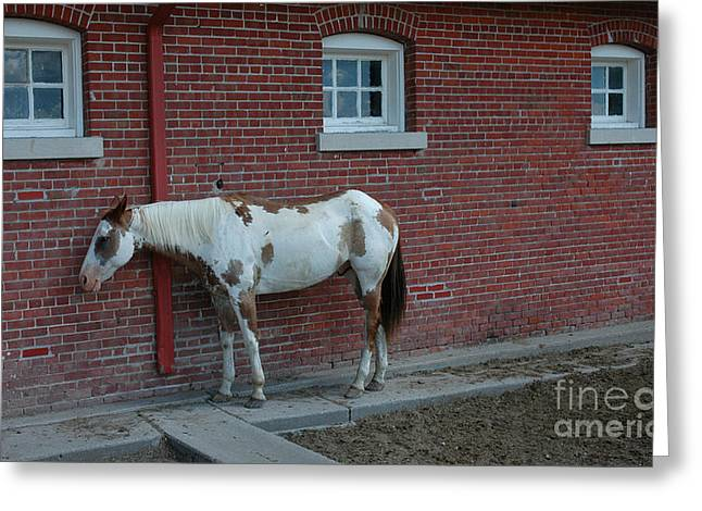 Calvary Greeting Cards - Fort Robinson Stable Greeting Card by Jerry McElroy