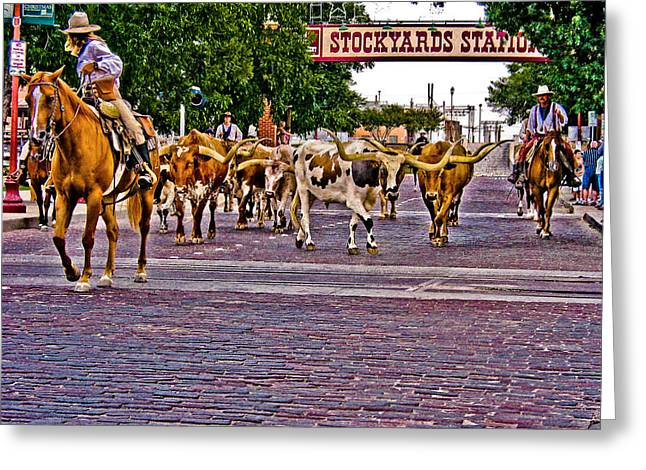 Stockyards Greeting Cards - Fort Worth Cattle Drive Greeting Card by David and Carol Kelly