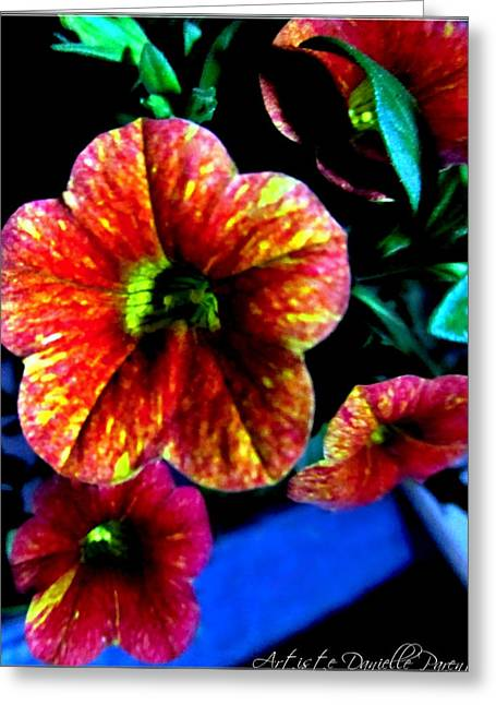 Fortinos Petunias Greeting Card by Danielle  Parent