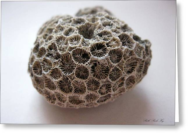 Photo Jewelry Greeting Cards - Fossil Coral Greeting Card by Beth Beck