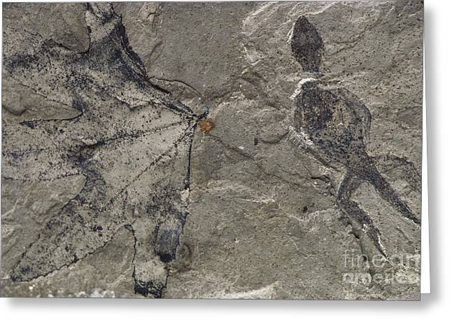 American Sycamore Greeting Cards - Fossil Lizard And Leaf Greeting Card by James L. Amos