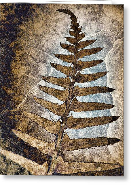 Frond Greeting Cards - Fossilized Fern Greeting Card by Carol Leigh