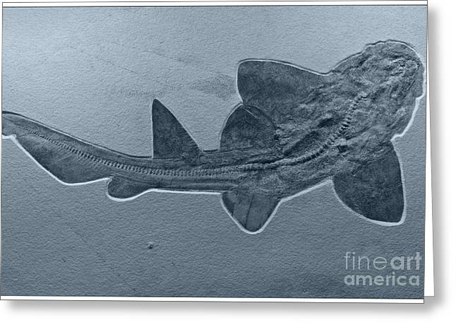 Shark Fossil Greeting Cards - Fossils Shark Greeting Card by Heiko Koehrer-Wagner