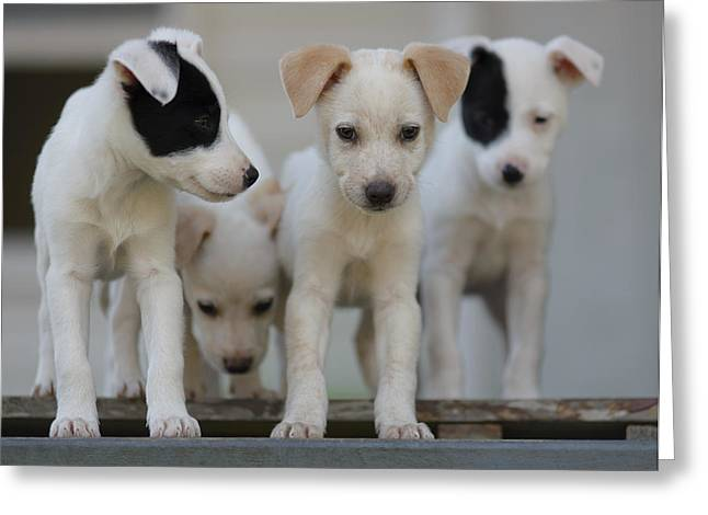 Passionfruit Photographs Greeting Cards - Foster Pups Greeting Card by Benita Walker