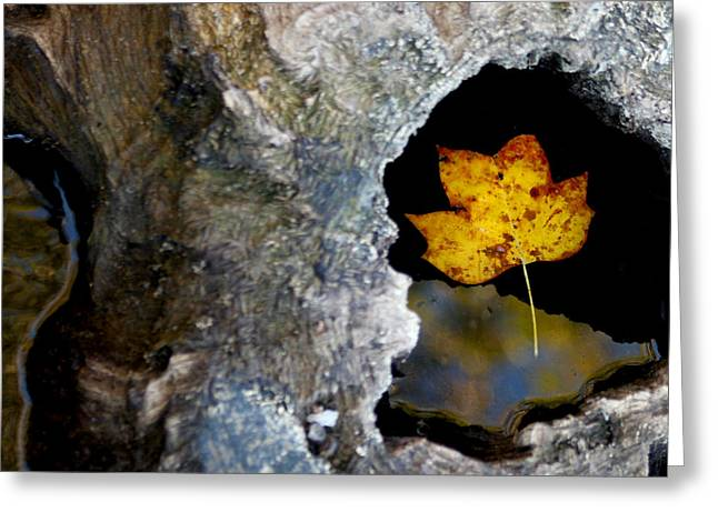 Fallen Leaf Greeting Cards - Found a Home Greeting Card by Art Block Collections