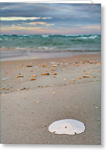 Florida Panhandle Greeting Cards - Found Money in Destin Greeting Card by JC Findley