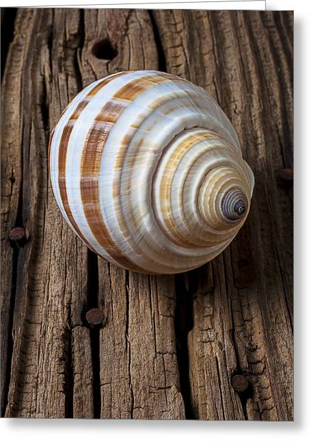 Shell Texture Greeting Cards - Found Sea Shell Greeting Card by Garry Gay