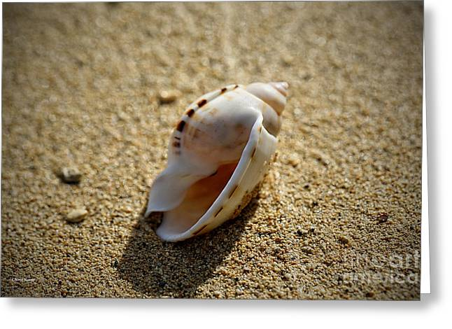 Half Shell Greeting Cards - Found Shells 2 Greeting Card by Cheryl Young