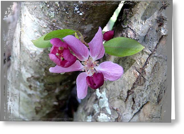 Crabapple Cards Greeting Cards - Found Treasure Greeting Card by Pete Trenholm