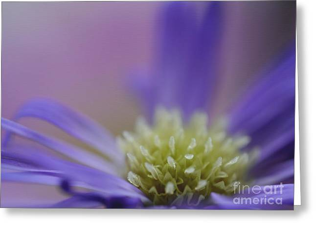 Pink And Lavender Greeting Cards - Fountain of Joy Greeting Card by Irina Wardas