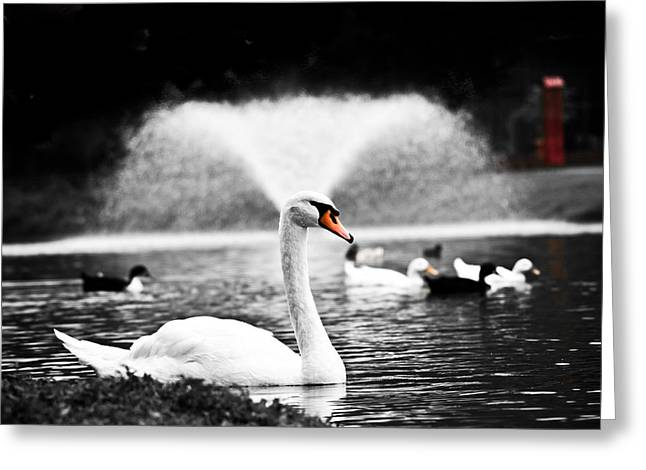 Swans... Photographs Greeting Cards - Fountain Swan Greeting Card by Shane Holsclaw