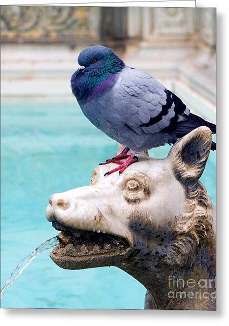 Carved Bird Greeting Cards - Fountain With Pigeon Greeting Card by Tim Holt