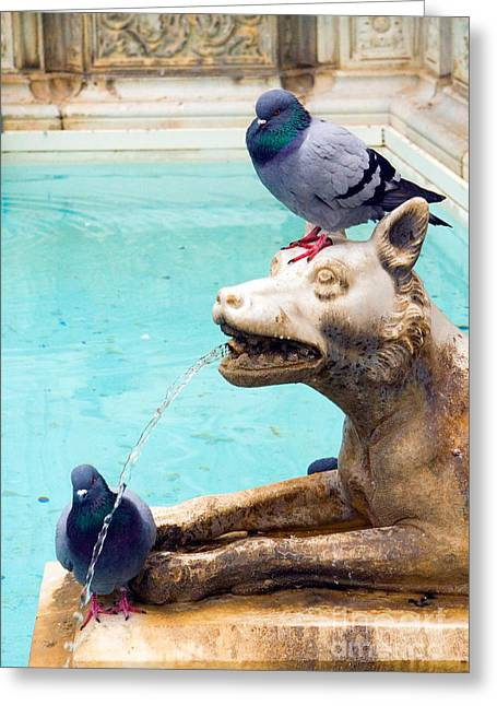 Carved Bird Greeting Cards - Fountain With Pigeons Greeting Card by Tim Holt