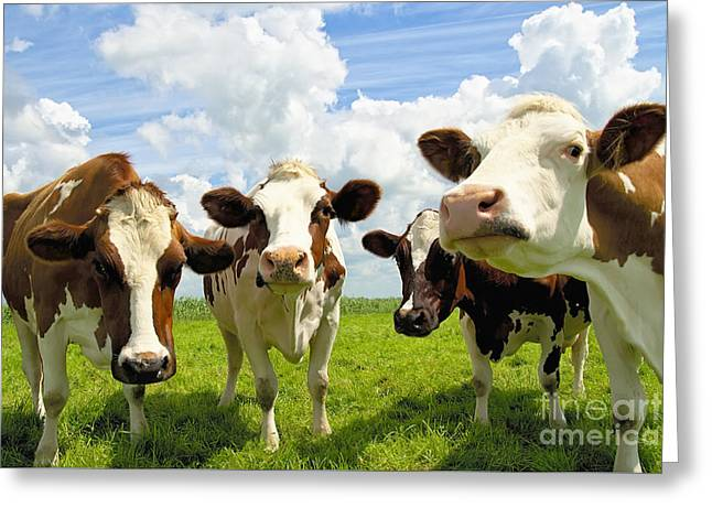 Urban Images Greeting Cards - Four chatting cows Greeting Card by Jan Brons