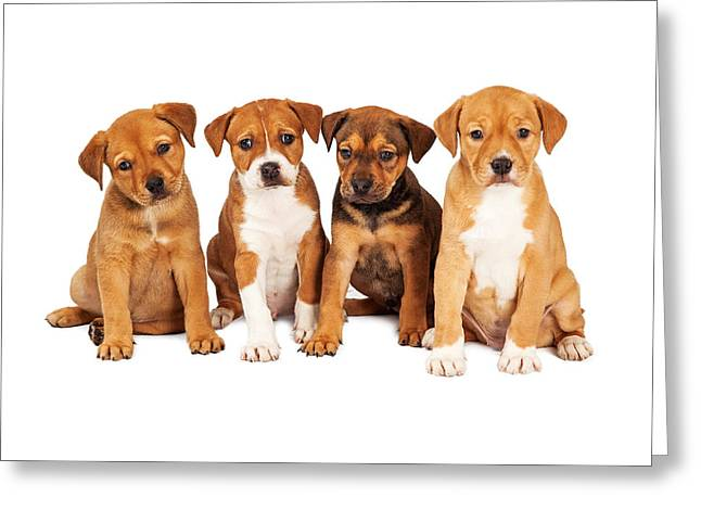 Litter Mates Photographs Greeting Cards - Four Cute Puppies Together Greeting Card by Susan  Schmitz