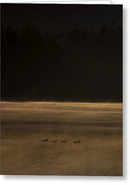 British Columbia Greeting Cards - Four Ducks Greeting Card by Aaron S Bedell
