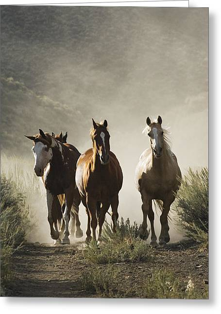 Equus Caballus Greeting Cards - Four Horses Approaching Greeting Card by Konrad Wothe