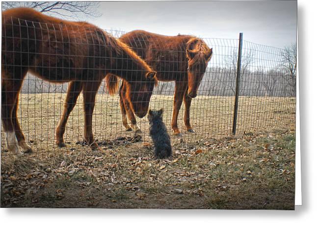 Neighborly Greeting Cards - Four Legged Neighbors Greeting Card by Don Wolf
