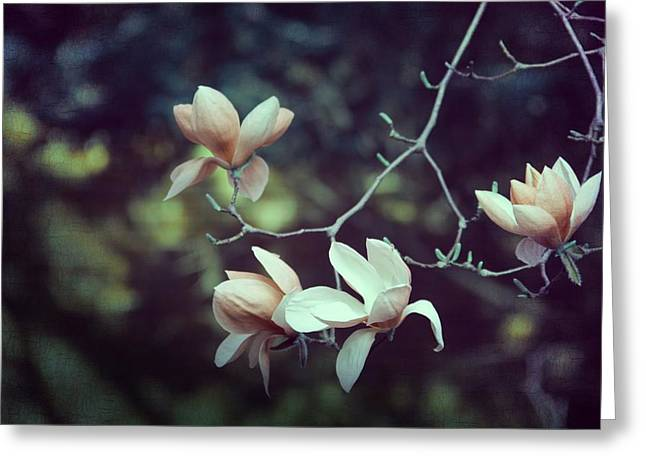 Focal Greeting Cards - Four Magnolia Flower Greeting Card by Marianna Mills