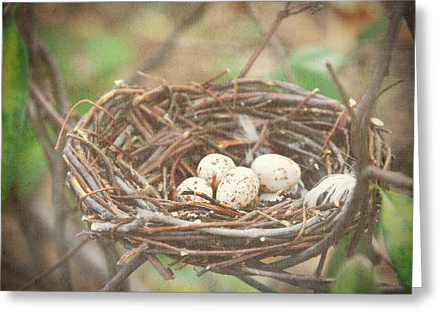 Haze Greeting Cards - Four Nest Eggs Greeting Card by Suzanne Barber