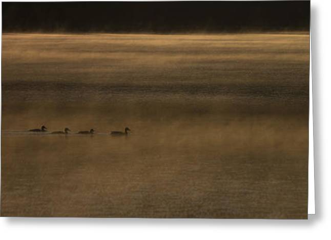Alta Greeting Cards - Four O Duck in the Morning Greeting Card by Aaron S Bedell