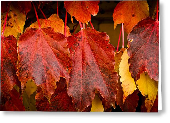 Turning Leaves Greeting Cards - Four of a Kind Greeting Card by Christi Kraft