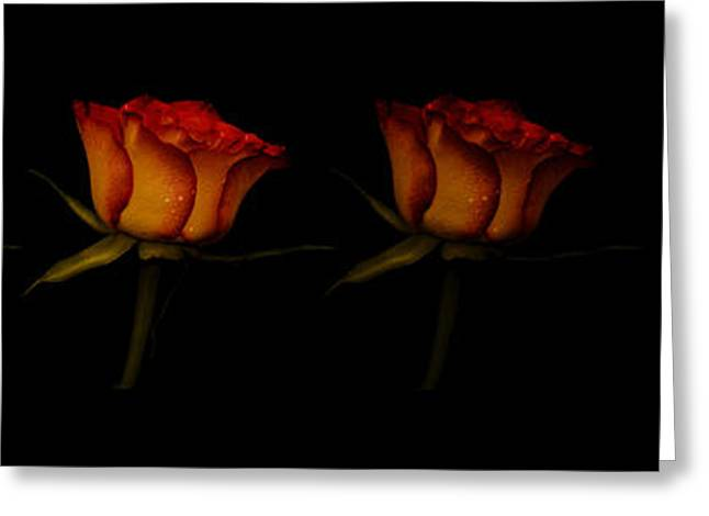 Rose Petals Greeting Cards - Four roses Greeting Card by Toppart Sweden