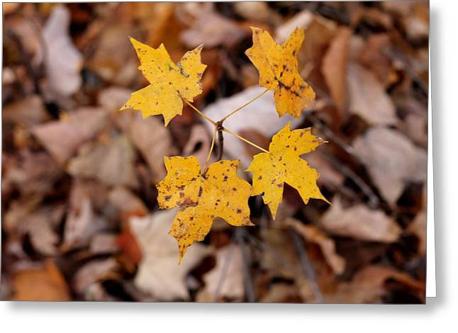 Indiana Autumn Greeting Cards - Four To Go Greeting Card by Abril Gonzalez