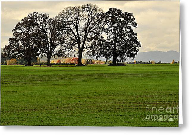 Wheat Field Sky Pictures Greeting Cards - Four Trees Greeting Card by Tonia Noelle