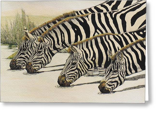 Pen And Ink Framed Prints Paintings Greeting Cards - Four Zebras Drinking 2 Greeting Card by Charles Berry