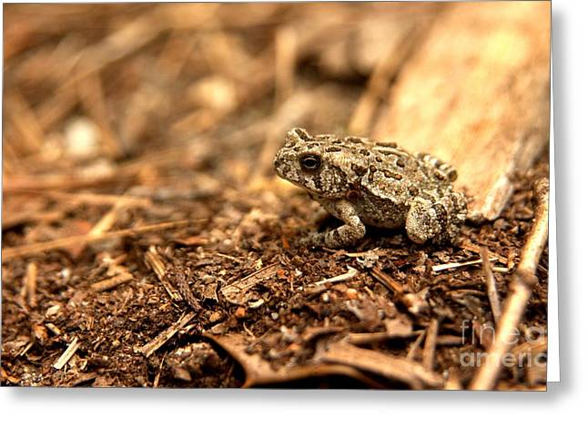 Fowler's Toad At Trap Pond Greeting Card by Anna Lisa Yoder