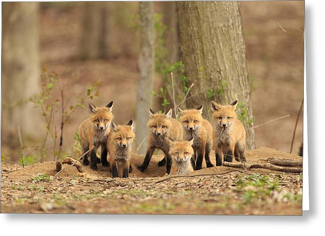 Kits Greeting Cards - Fox Family Portrait Greeting Card by Everet Regal