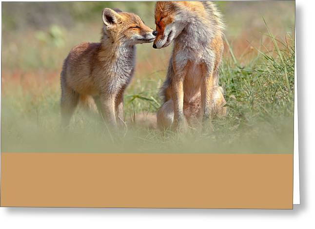 Fox Felicity - Mother And Fox Kit Showing Love And Affection Greeting Card by Roeselien Raimond
