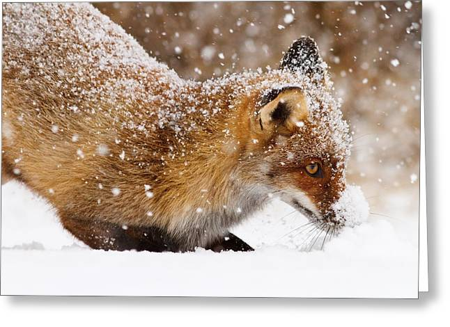 Winter Storm Greeting Cards - Fox First Snow Greeting Card by Roeselien Raimond