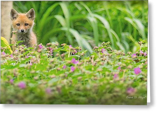 Fox Kit Greeting Cards - Fox in the garden Greeting Card by Everet Regal