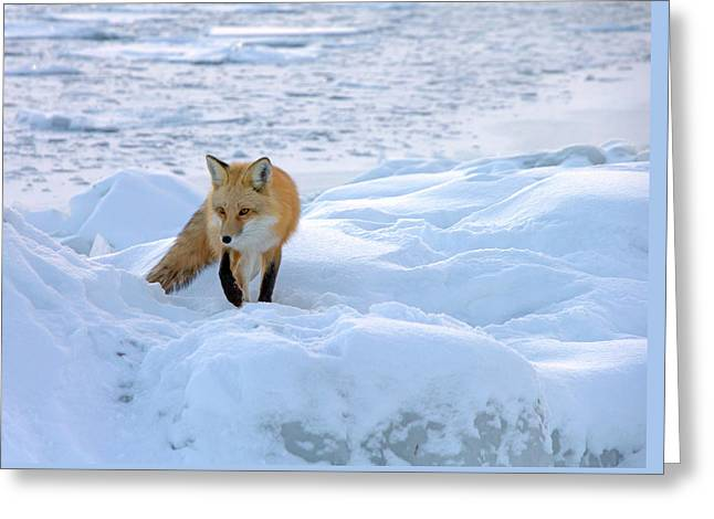 Fox Of The North II Greeting Card by Mary Amerman