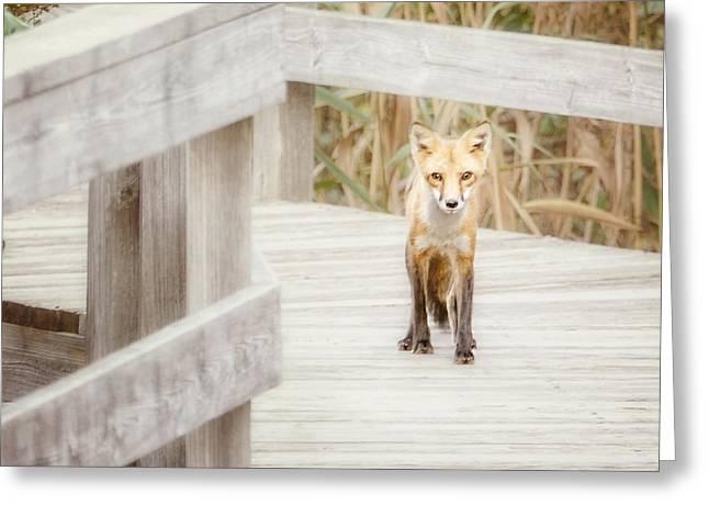 Babylon Greeting Cards - Fox on the Boardwalk Greeting Card by Vicki Jauron
