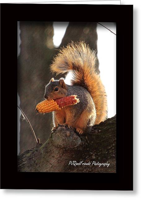Fox Squirrel Greeting Cards - Fox Squirrel and Cob Greeting Card by PJQandFriends Photography