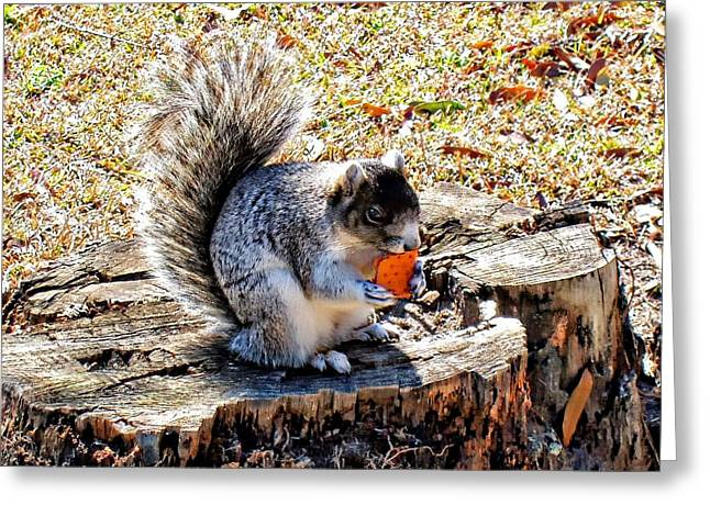 Fox Squirrel Greeting Cards - Fox Squirrel Greeting Card by David  Clement
