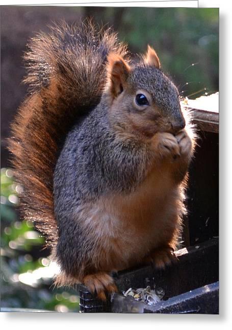 Fox Squirrel Greeting Cards - Fox Squirrel Greeting Card by Deena Stevens