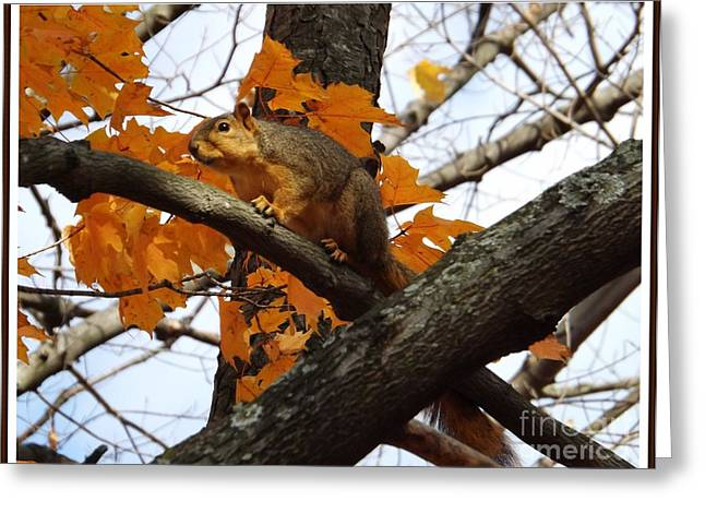 Fox Squirrel In Autumn Greeting Card by Sara  Raber