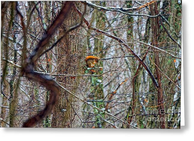 Fox Squirrel Greeting Cards - Fox Squirrel in Hiding Greeting Card by Timbo Connard