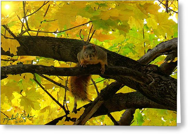 Fox Squirrel  Greeting Card by Michael Rucker